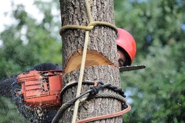 arboriculteur 10