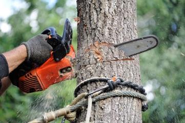 arboriculteur 11