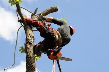 arboriculteur 13
