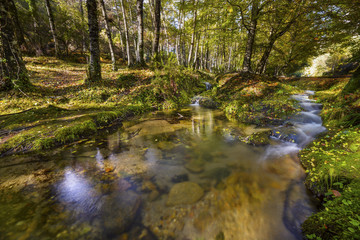 Small stream at forest, Gerês, Portugal