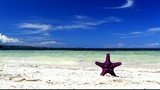 Starfish on tropical beach, footage