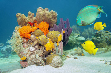 Colors of marine life underwater