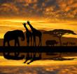 Silhouette elephant,giraffes,rhino and zebras in the sunset