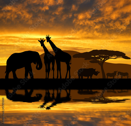 Silhouette elephant,giraffes,rhino and zebras in the sunset