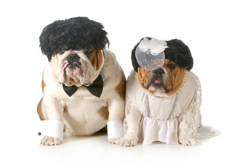 bride and groom dog