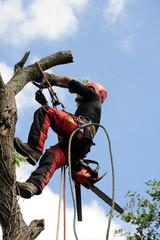 arboriculteur 19