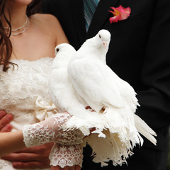 pair of white pigeons in groom's and bride's hands