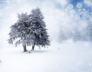Christmas background with snowy firs