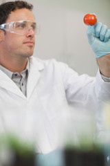 Young male scientist examining a tomato