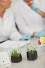 Close up of two beakers with grass in them standing on a desk