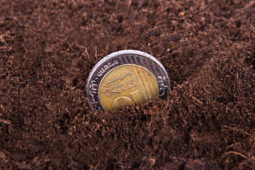 Coin Growing in Soil