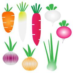 Vegetable tuber plant vector set