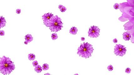 キク花の爆発