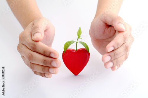 Hands protecting a baby plant on white background