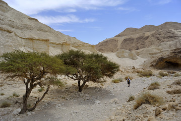 Zohar wadi in Judea desert.