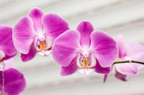 fioletowy-kwiat-orchidei