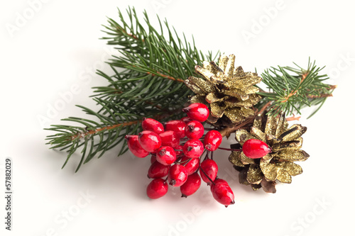 Spruce, berries, pine cones on white