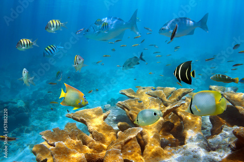 Reef with fish and Elkhorn coral