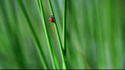 Ladybird on grass episode 3