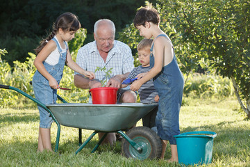 grandfather teaches children to plant plants
