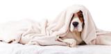 dog under a blanket ...