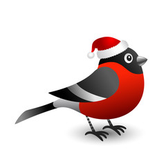 Bullfinch in red hat