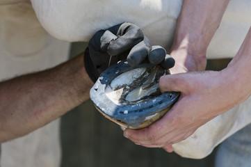 maniscalco mentre cambia il ferro ad uno zoccolo
