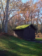 Shed in Fall Forest