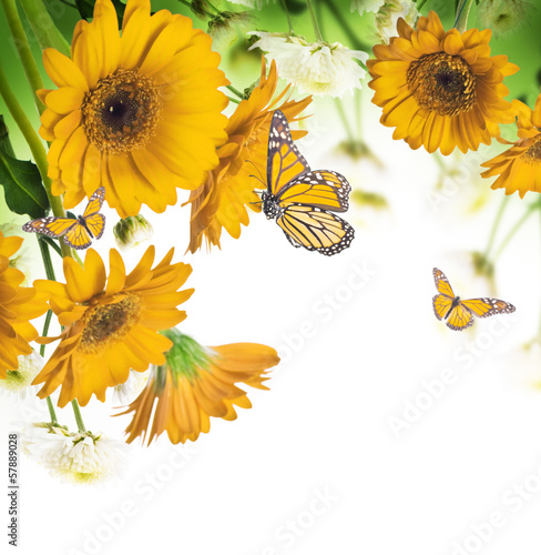 Foto op Canvas Madeliefjes Multi-colored gerbera daisies and butterfly