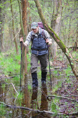 hiker in the boggy forest walking with poles
