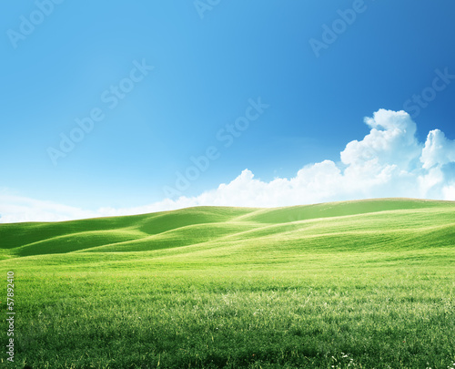 field of spring grass, tuscany