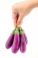 Hand holding oval egg plants on white
