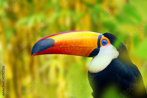 Deurstickers Toekan Colorful Toucan Bird