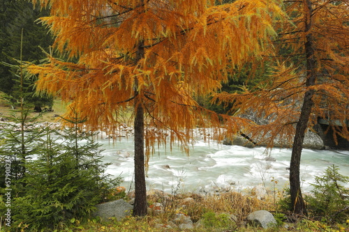 Autumn landscape with larches and river