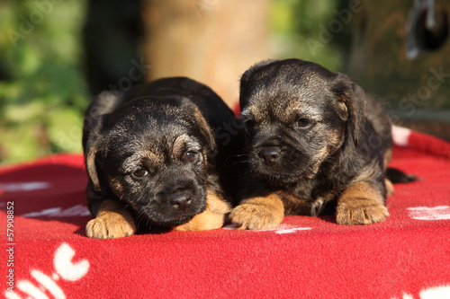 Two adorable puppies lying on blanket