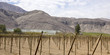 Farmland of vineyard. Chilean Andes.