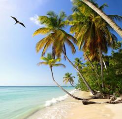 Palm beach at Tobago, West Indies with Frigatebird