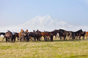 Herd of horses on a summer pasture. Caucasus