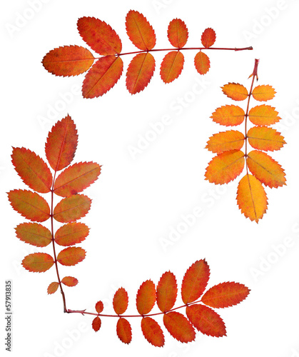 ornament inlaid with autumn leaves