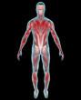 Uomo muscoli corpo umano ai raggi x retro
