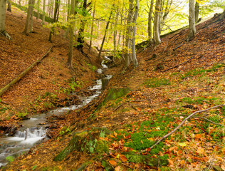 Stream through the autumn trees