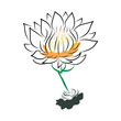 hand drawing water lily, lotus, flower