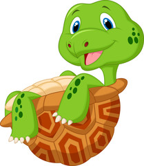 Cute tortoise cartoon