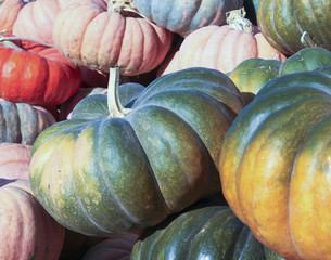 A Pile of Freshly Harvested Pumpkins