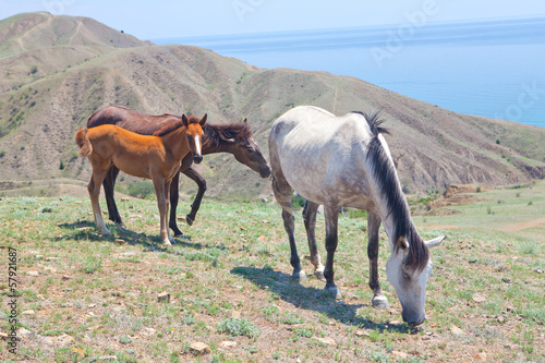family horse eats grass on the seashore
