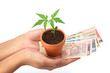 Hands holding plant with Indian currency - Growing investment