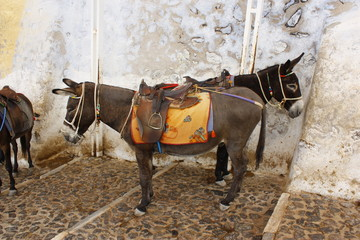 donkey station