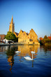 White swans in Bruges canal