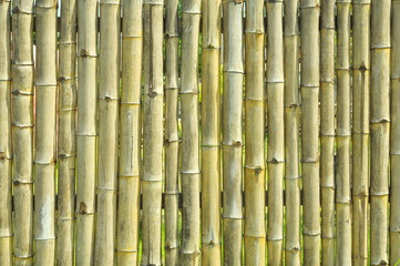 old bamboo wall texture background