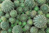 Closeup of beautiful cactus